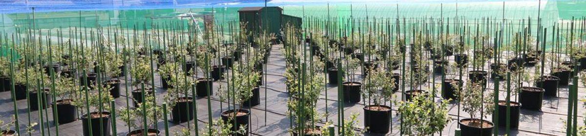 iZM Blueberry Farm